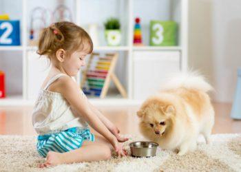 Girl feeding a pomeranian at home