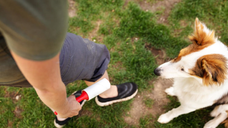 Adult man using a lint roller to remove pet fur on his pants