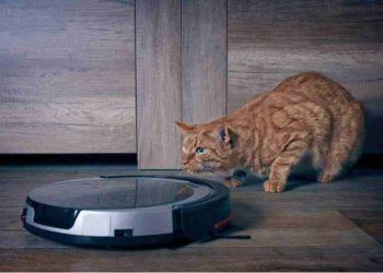 cat looking at a smart vacuum