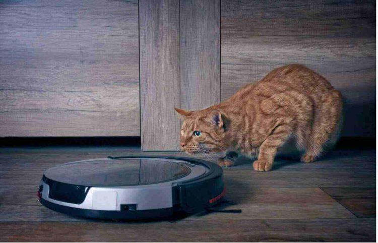 cat looking at a smart vacuum