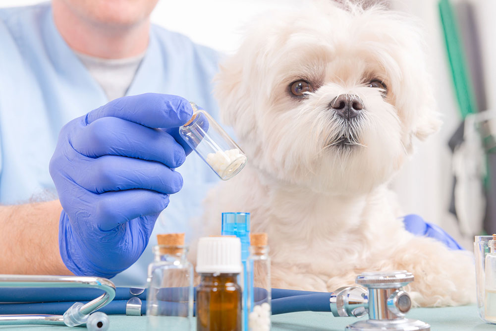 white dog with medication in front of it