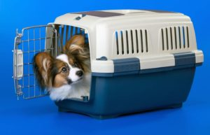Young dog in a plastic carrier