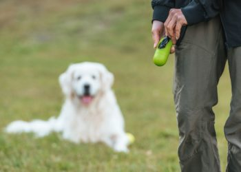 white cute dog looking at poop bag on his owners hands