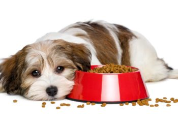 dog lying beside an overflowing red food bowl