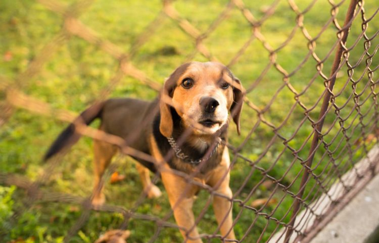 cute puppy inside a fence looking