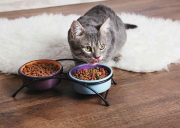 A cute cat eating on the floor with two bowls of cat foods