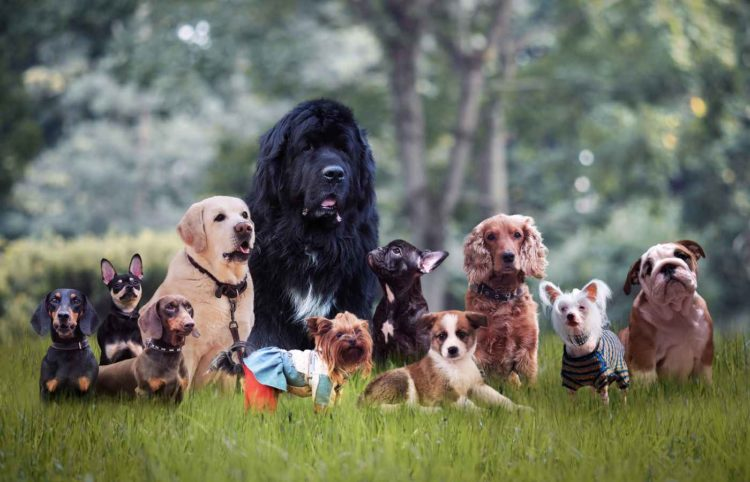 different breeds of dogs on the grass