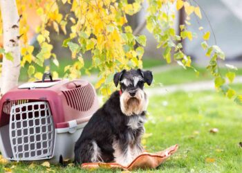 Cute dog sitting on pillow beside plastic carrier on grass in park