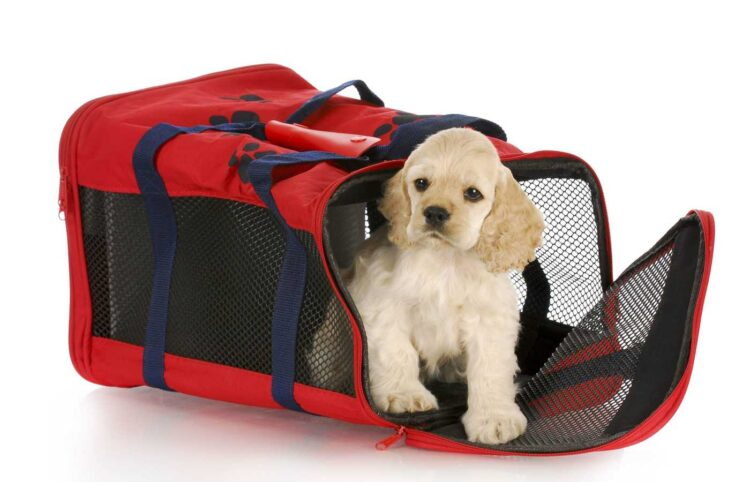 cute puppy in a red soft sided dog crate bag on white background