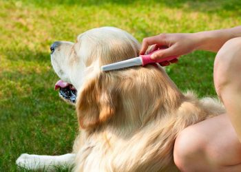 Human hand brushing golden retriever's soft fur