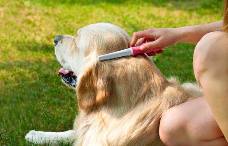 Human hand brushing golden retriever's soft fur