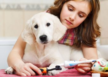 a girl putting a dog toothpaste on a toothbrush with her cute puppy labrador