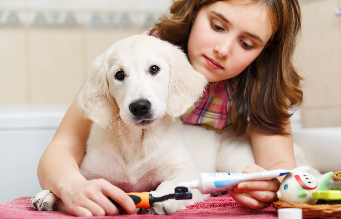dog teeth brushing toothpaste services cleaning pups silky pet dogs dogi healthy