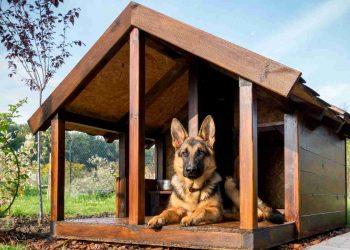 German shepherd resting in its wooden dog house