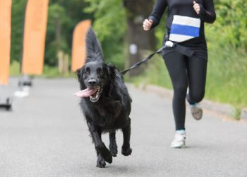 Dog and his owner are running together