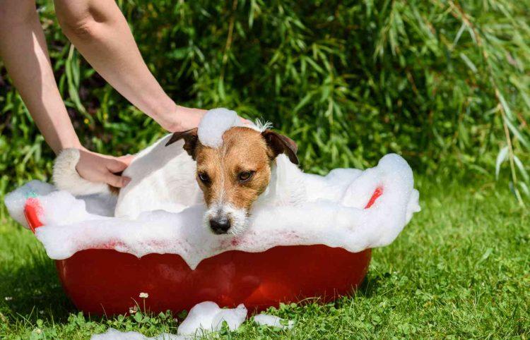 dog takes a bath outside