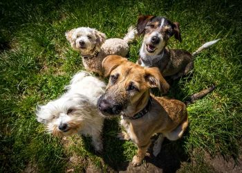 mix of dog breeds outside on lawn