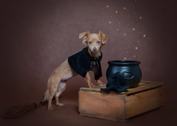 dog wearing a cape standing next to a cauldron