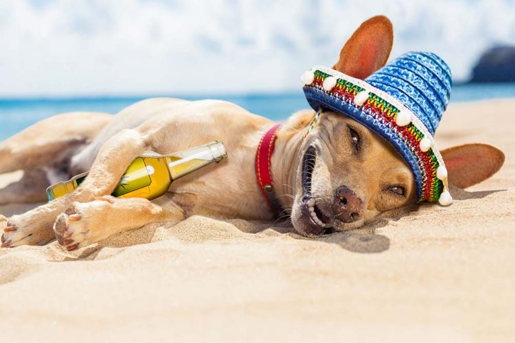 dog laying on the sand with a colorful sombrero on