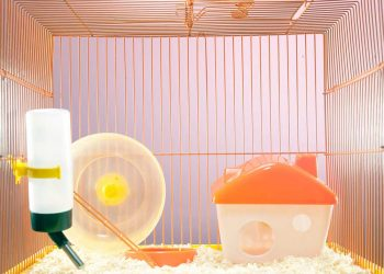 Empty hamster cage with a house, water bottle and wheel