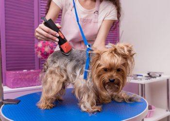 dog getting groomed on a table