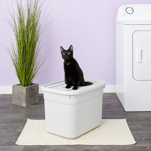 Clevercat Top-Entry Litter Box