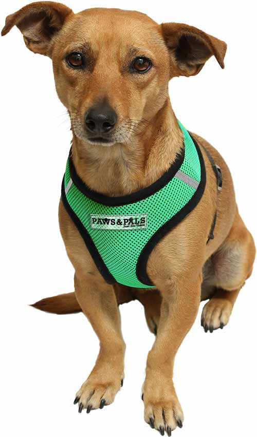 Paws & Pals Harness XL