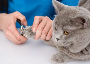 Cat getting its nails clipped