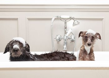 two dogs in the bath being shampooed