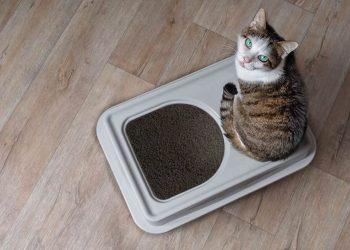 Cat sitting on top of litter box