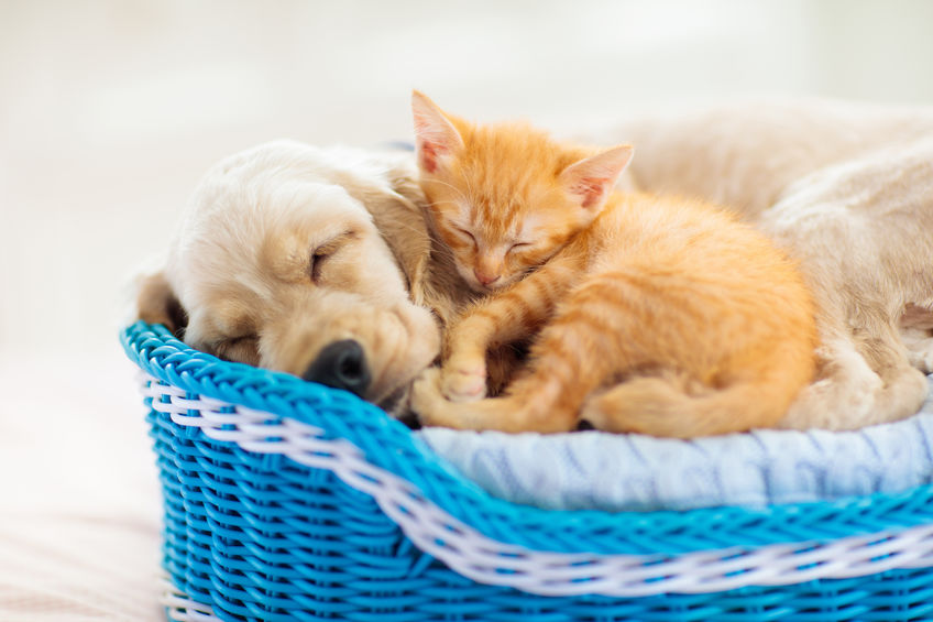 cute dog and cat sleeping together