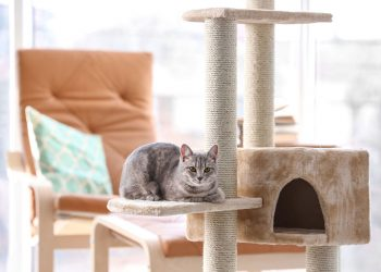 grey cat on a large cat tree in the lounger