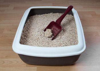 scoop in a litter box