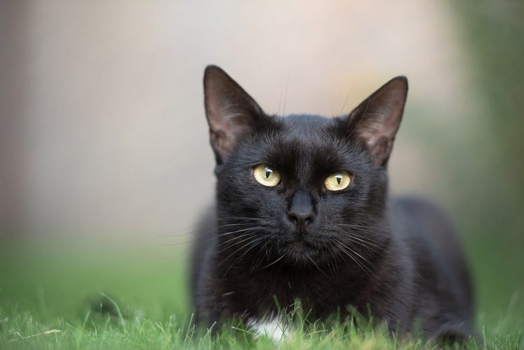 black cats outdoors on the grass