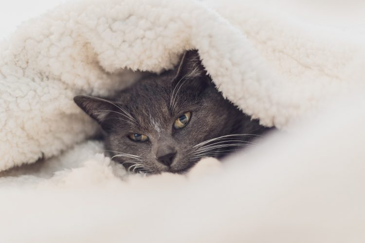 Cat in a bed all cosy