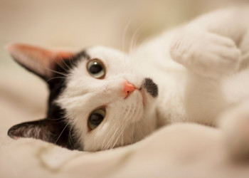 Best Heated Cat Bed PetStruggles
