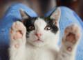Best Probiotics for Cats PetStruggles
