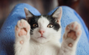 Cat with paws in air
