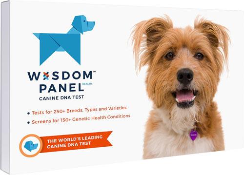 Wisdom Panel Health Breed & Health Identification Dog DNA Test