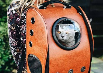 cat inside a backpack