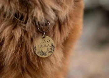 Cat wearing a cat tag