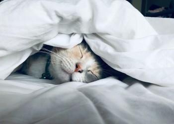 happy sleeping cat