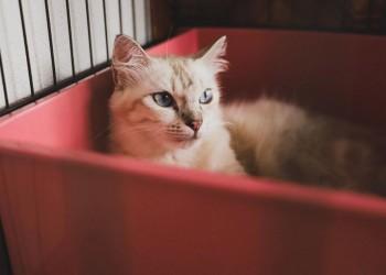 kitten inside red carrier