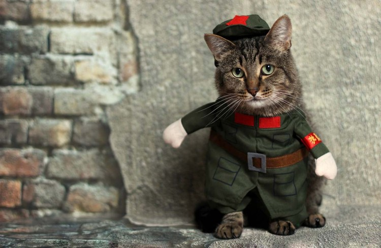 Cat Wearing a Military Costume