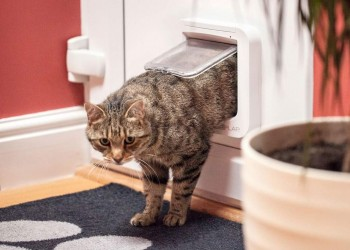 Kitten Walking Through a Cat Door