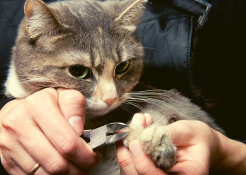 How to Restrain a Cat to Clip Its Nails_Featured Image