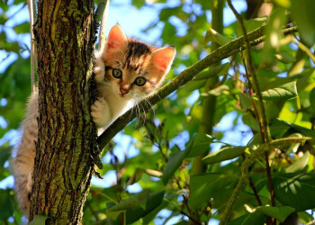How to get a cat out of a tree featured image