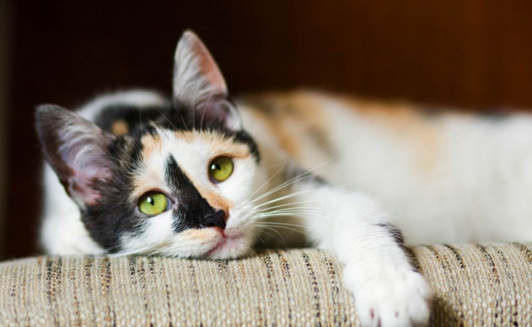 Is My Cat Bored_Featured Image