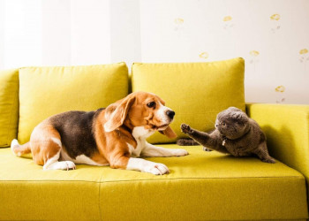 Why Are Dogs and Cats Sworn Enemies Featured Image