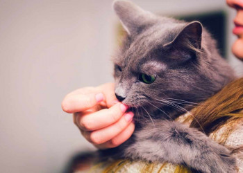 Why do some cats groom their owners featured image